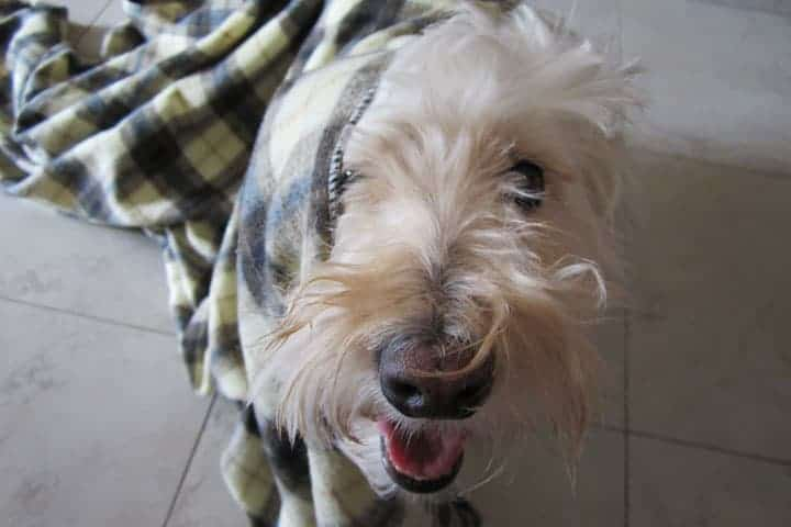 chica-panting-blanket