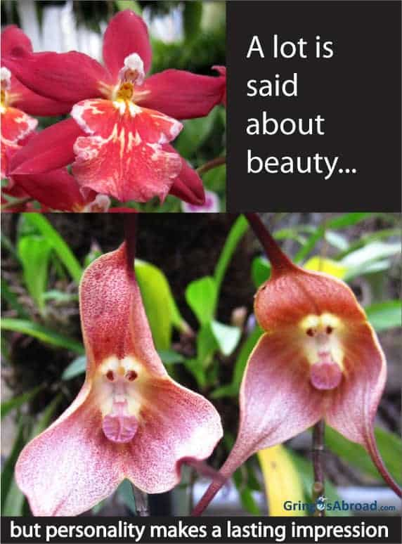 beauty-monkey-faced-orchid